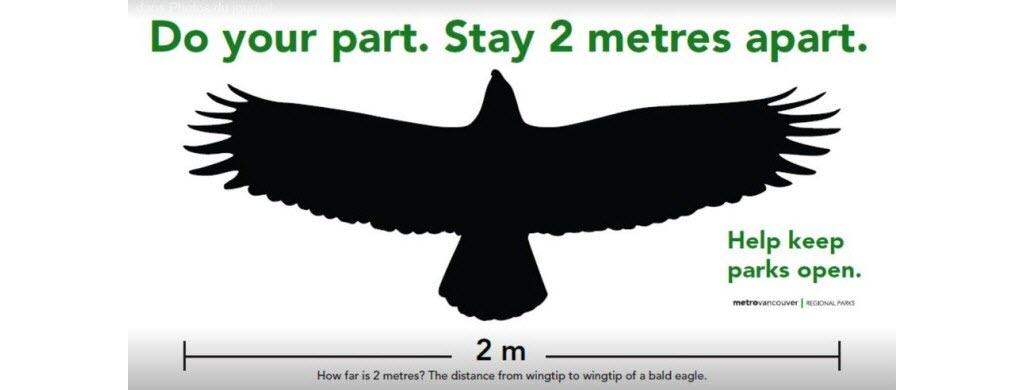 Au Canada dans le parc de Vancouver, 2 m = la largeur des ailes du pygargue à tête blanche, un rapace