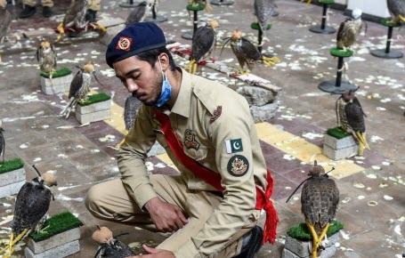 Pakistan : les faucons retrouvent la liberté