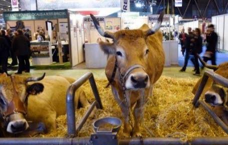 Manifestation : adieu veaux, vaches, cochons...