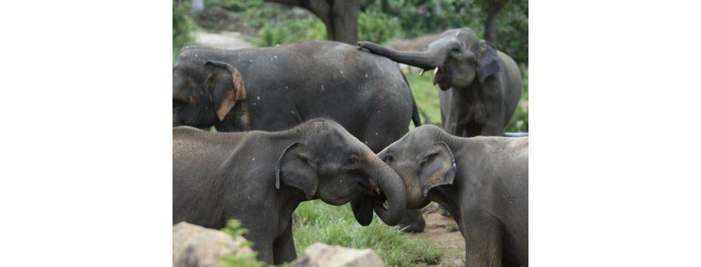 Stop au plastique tueur d'éléphants