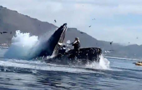 Englouties par une baleine