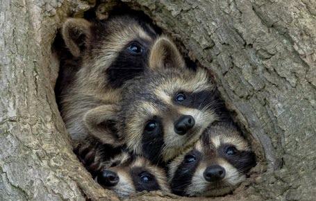 Quelle photo d'animal sera la plus drôlecette année?