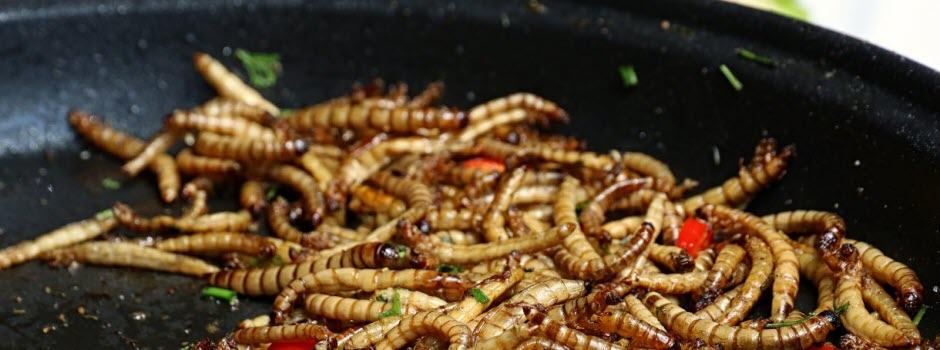 Des insectes dans ton assiette