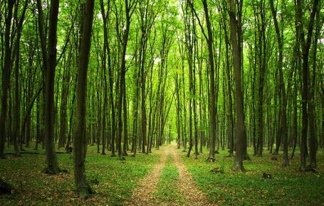 Un été en forêt