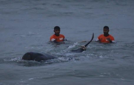 120 dauphins sauvés
