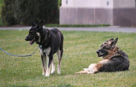 Le chien Major retourne à l'école