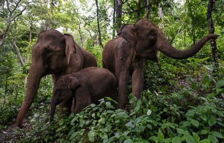 Les éléphants sont rentrés à la maison !