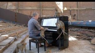 Paul joue du piano pour des singes
