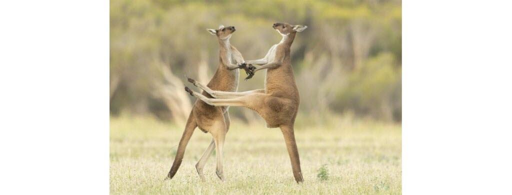 © Lea Scaddan/Comedy Wildlife Photography Awards 2021
