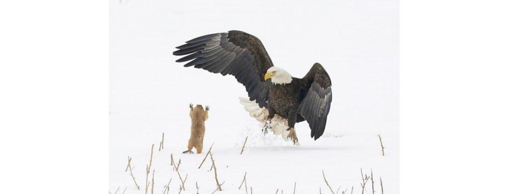 © Arthur Trevino/Comedy Wildlife Photography Awards 2021
