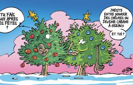 Une 2e vie pour les sapins de Noël