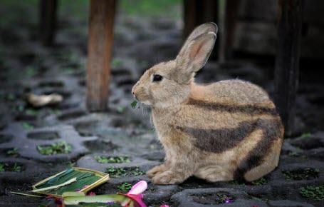 Un lapin rare sauvé