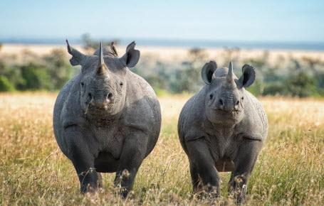 Il faut sauver le soldat rhino