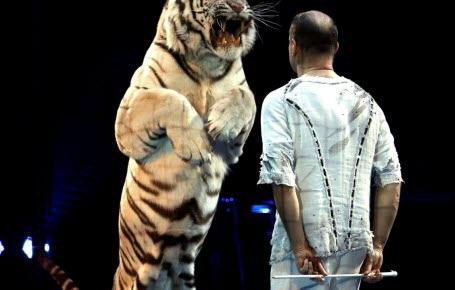 La fin des animaux sauvages au cirque