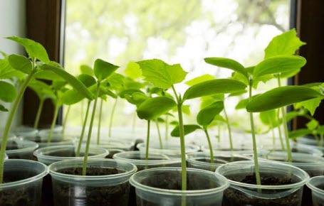 Jardiner dans l'espace, c'est possible ?