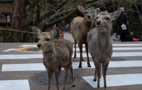 Nature : animaux dans les rues