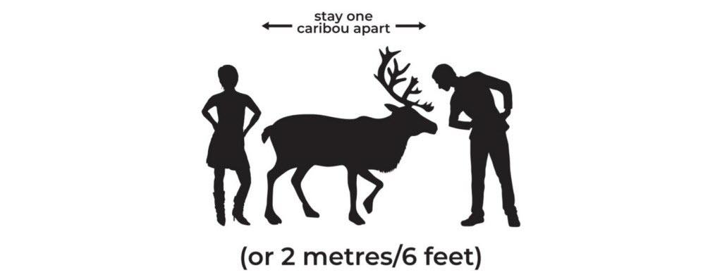 Au Canada dans le Yukon, 2 m = un caribou