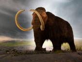 Percer les mystères des mammouths