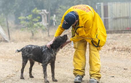 États-Unis: sauver les animaux du feu