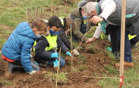 Savez-vous planter les arbres?