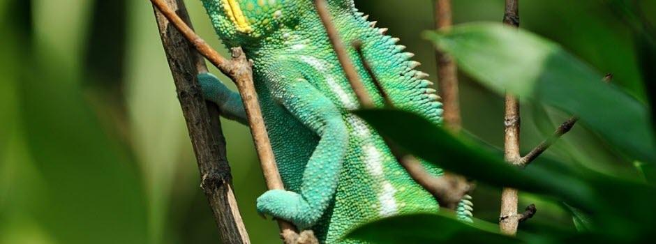 Des animaux plus étonnants qu'ils n'en ont l'air