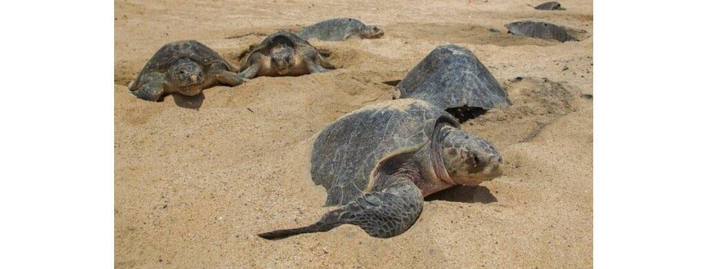 Hola, bébés tortues !