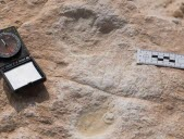 Une empreinte d'homme vieille de 120 000 ans