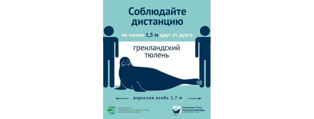 En Russie dans les parcs arctiques, 2 m = la taille d'un phoque