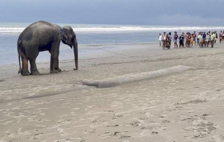 Éléphants rescapés