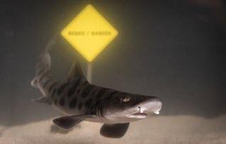 16 petits requins