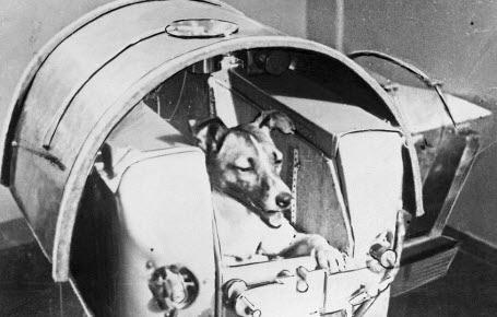 Combien d'animaux sont allés dans l'espace ?