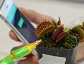 Plantes ou robots? Les deux!
