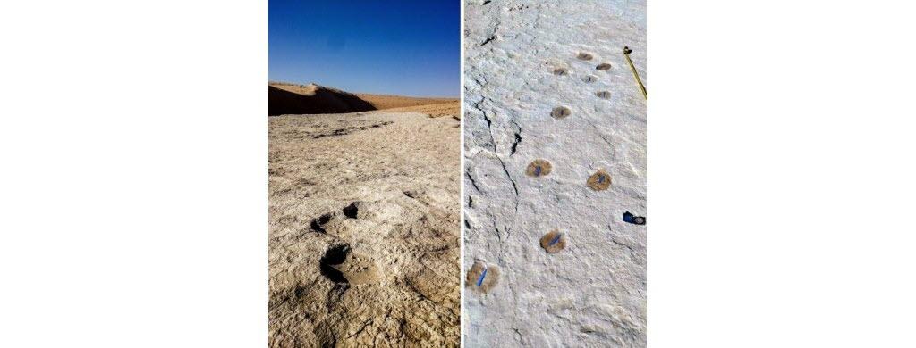 Ces traces de pas d'éléphant (à gauche) et de chameau (à droite) figurent parmi les empreintes fossiles découvertes autour de l'ancien lac Alathar en Arabie Saoudite. (AFP/Stewart&Al.)